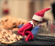 elf-shelf-robinwood_0127